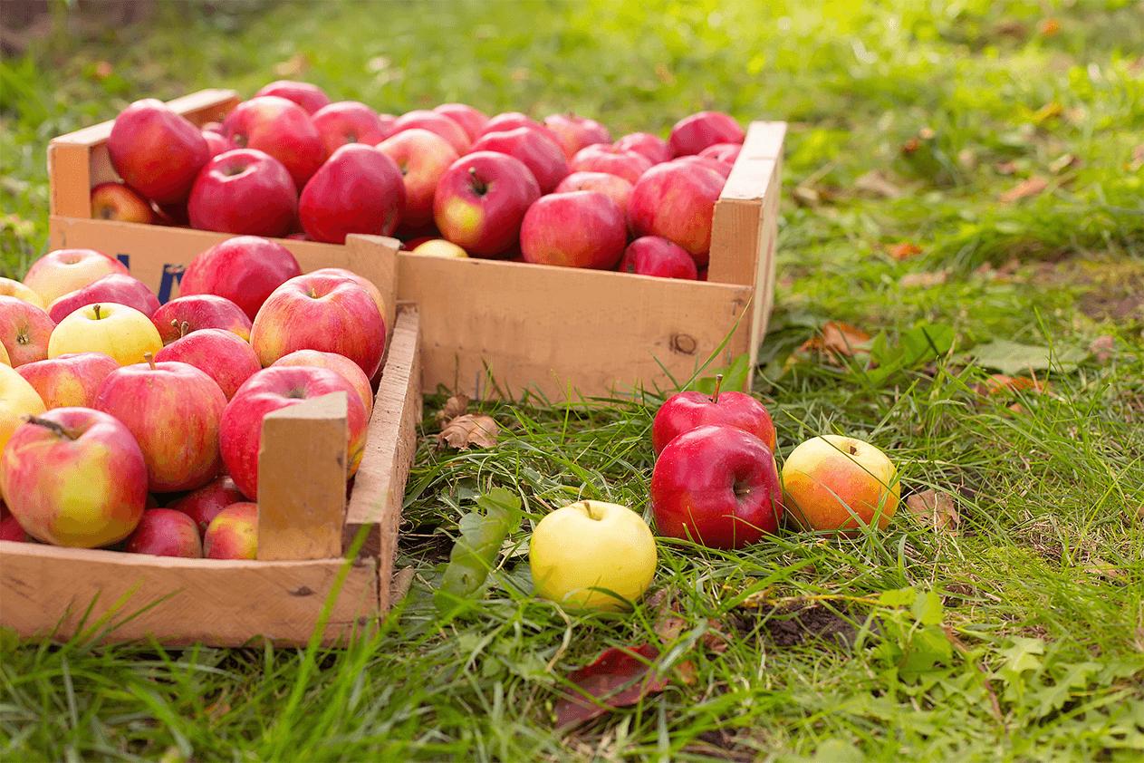 apples crates